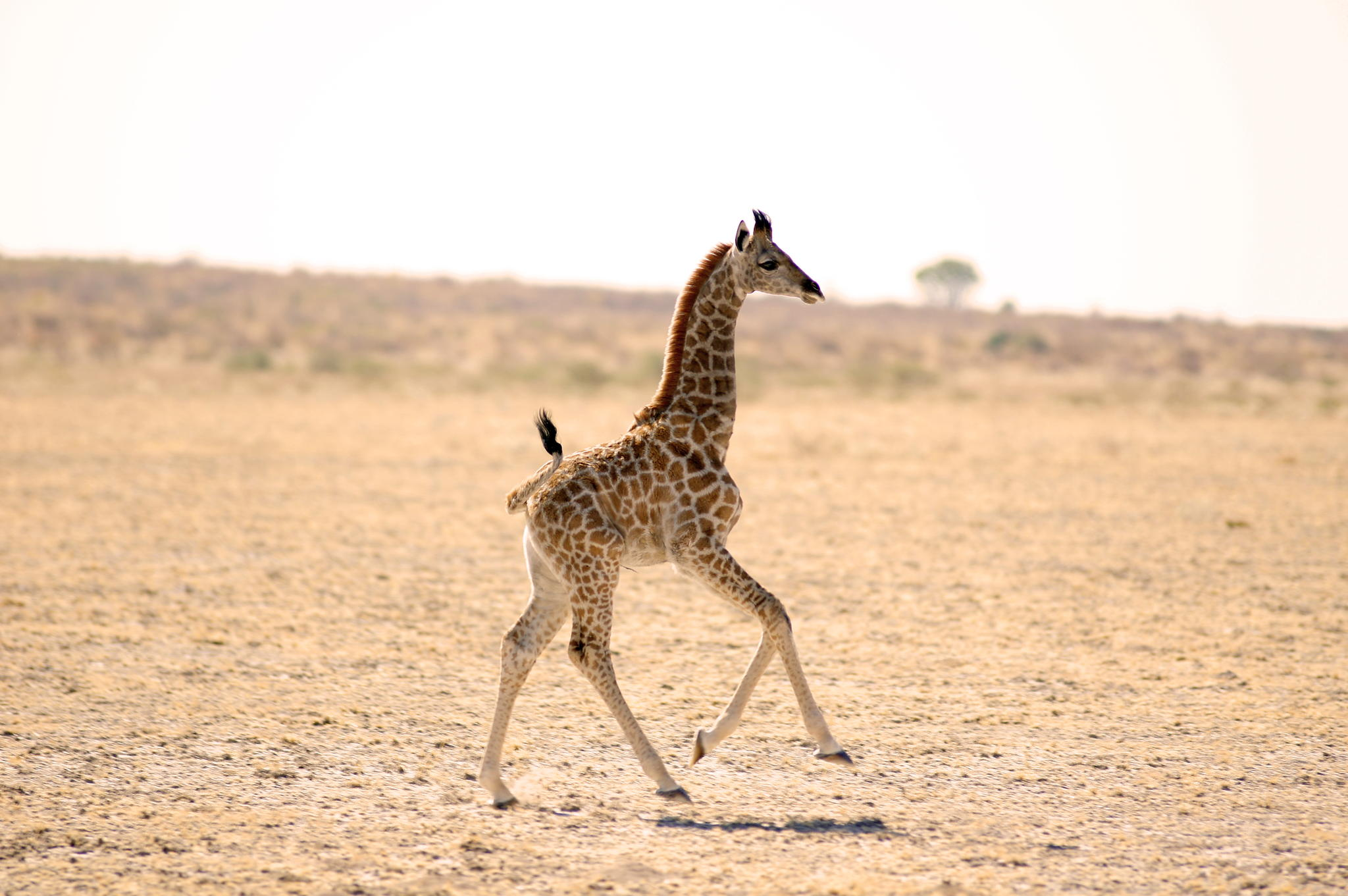 25 Photos Of Cute Baby Giraffes That Will Make Your Day Better
