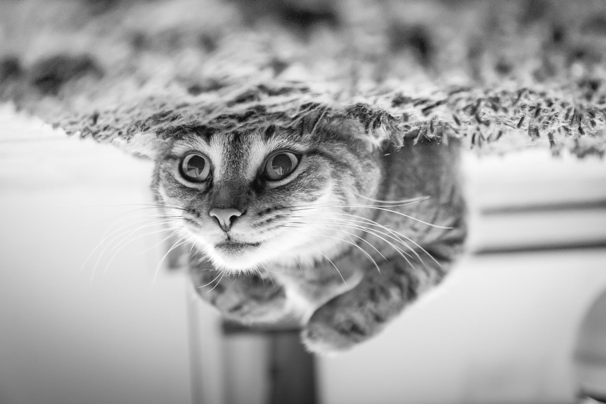 500px blog best photos of 2013 cats 500px blog
