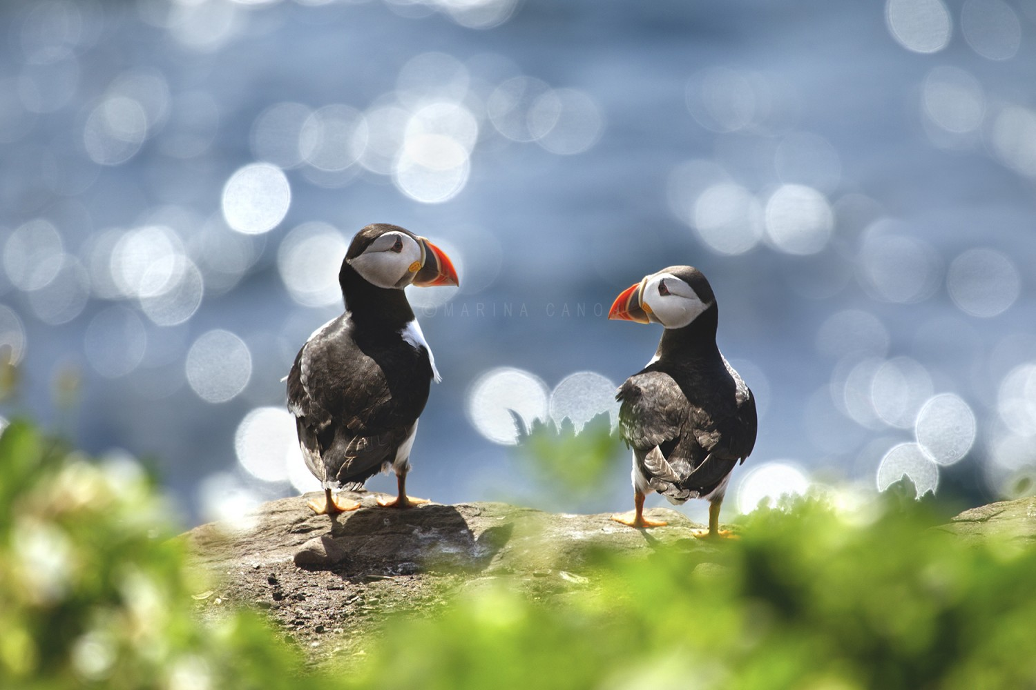 37 Photos Of Precious Puffins That Will Melt Your Heart