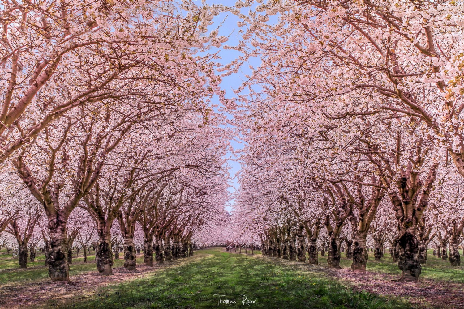 45 Charming Cherry Blossoms That Will Inspire Your Day