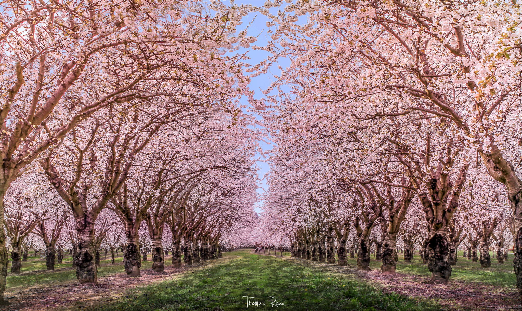 500px blog the passionate photographer community 45 Cherry blossom pictures
