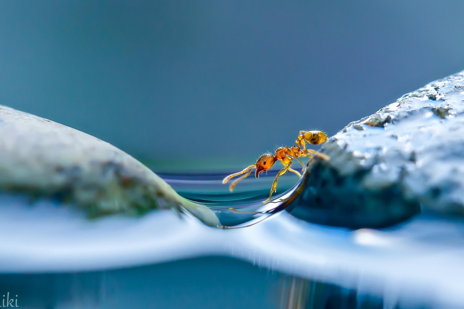 Miki Asai Shares Her Secrets To Shooting Macro