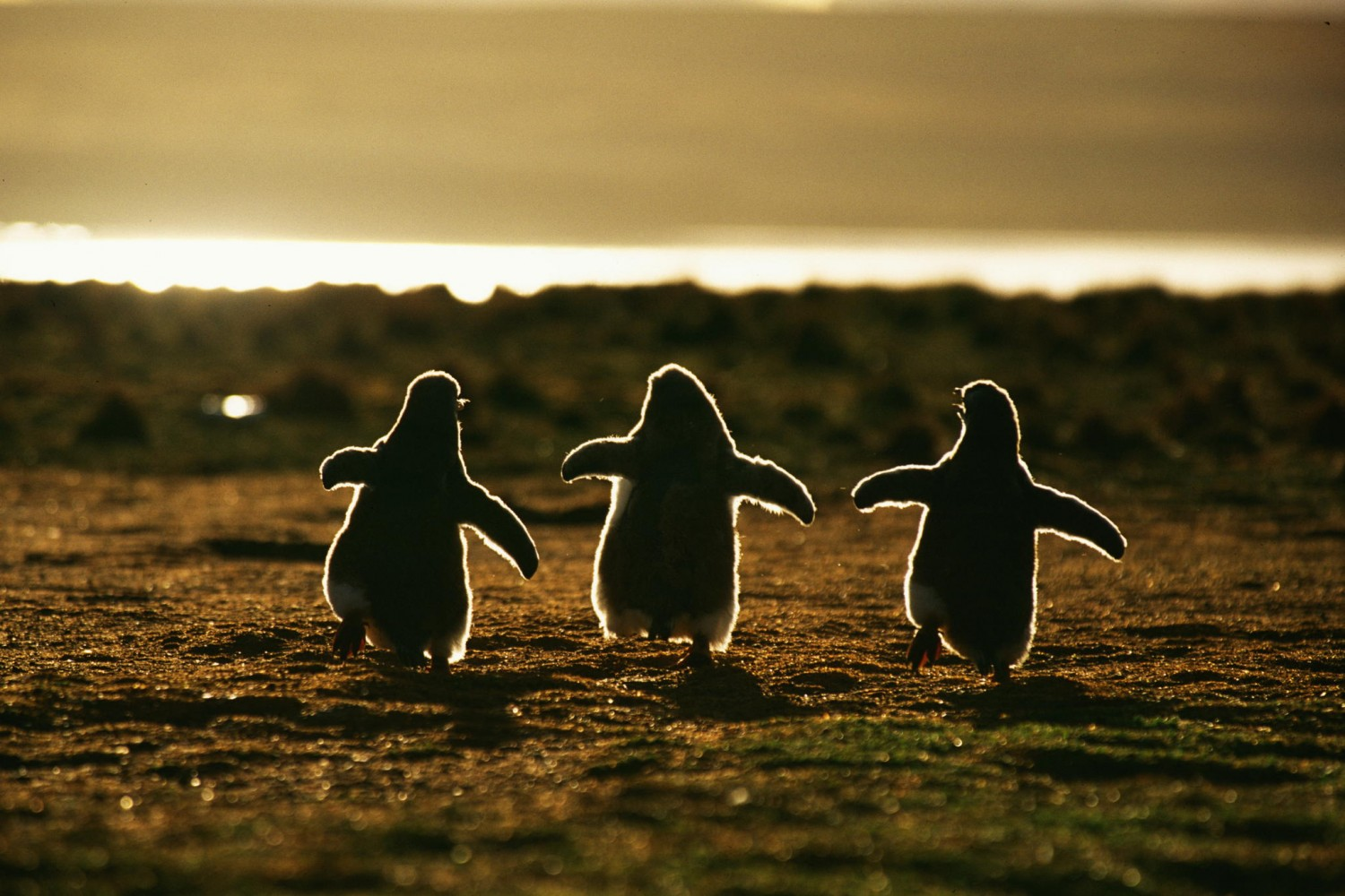 30 Adorable Photos of Penguins Hanging Out Together