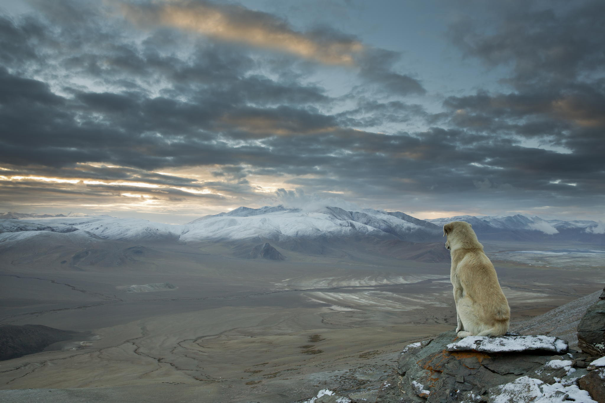 That Mysterious 'Winter is Coming' Himalayan Dog Photo