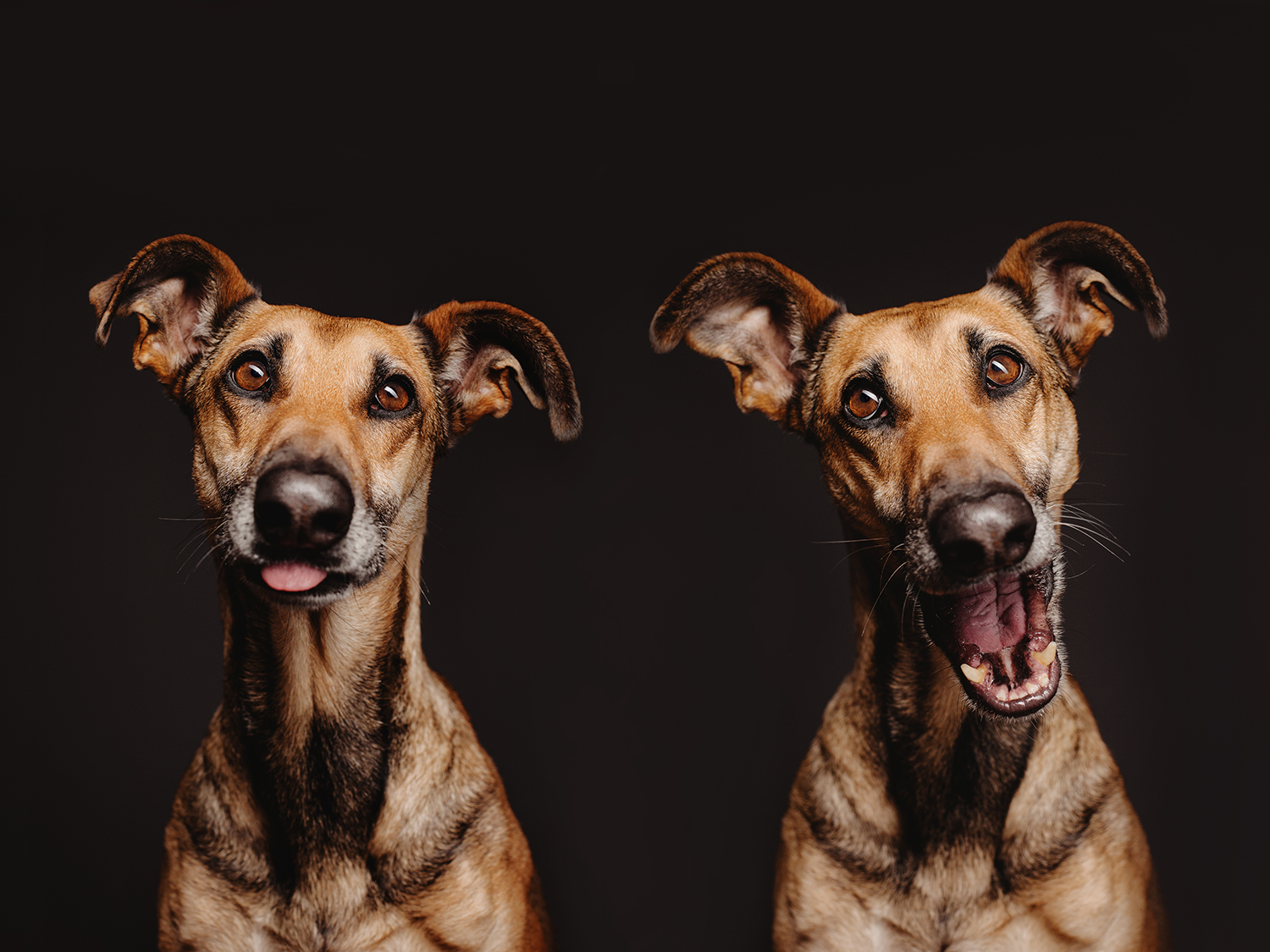 Introducing 500px ISO With Elke Vogelsang