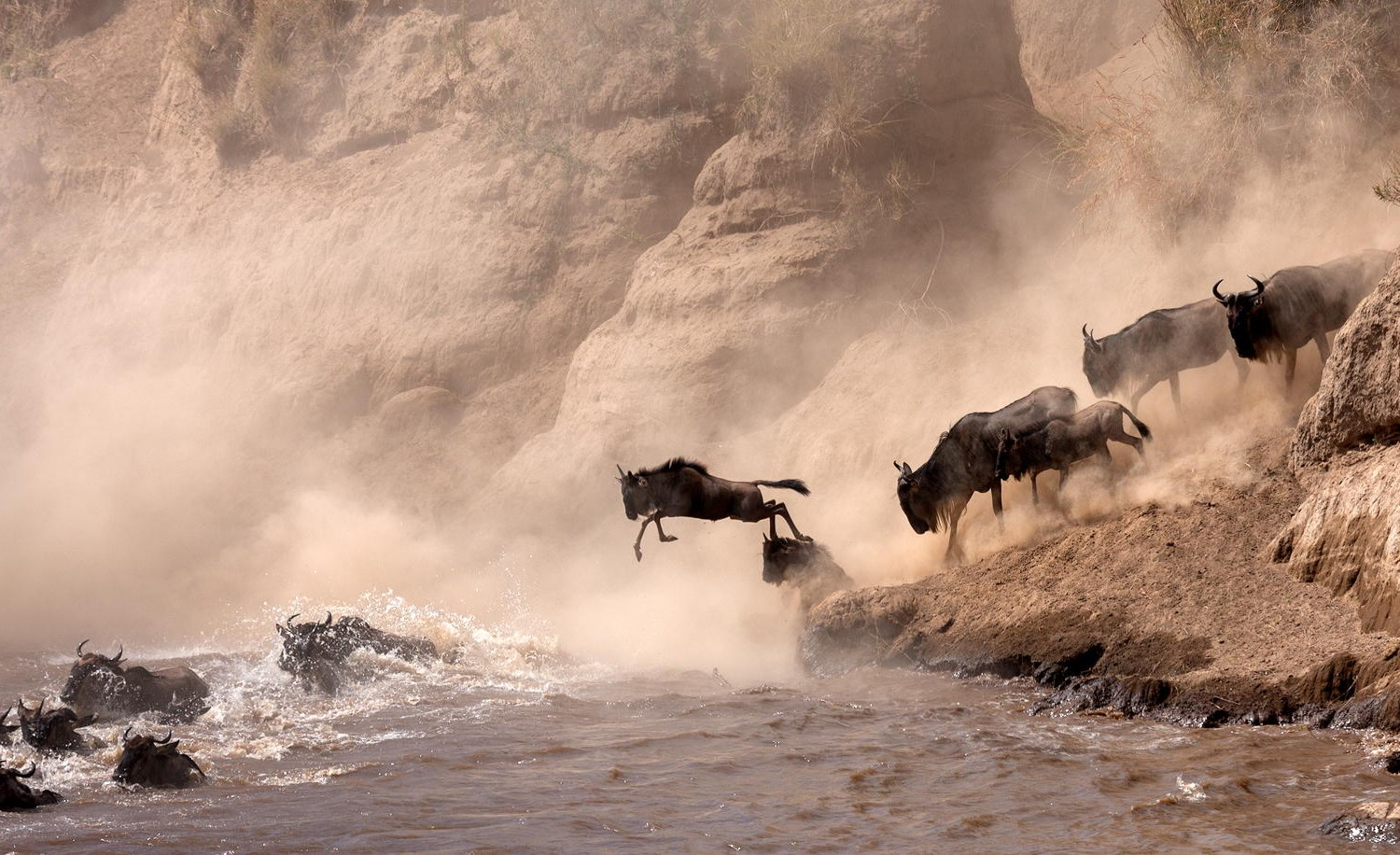 The Most Dramatic Animal Migrations Captured On Camera