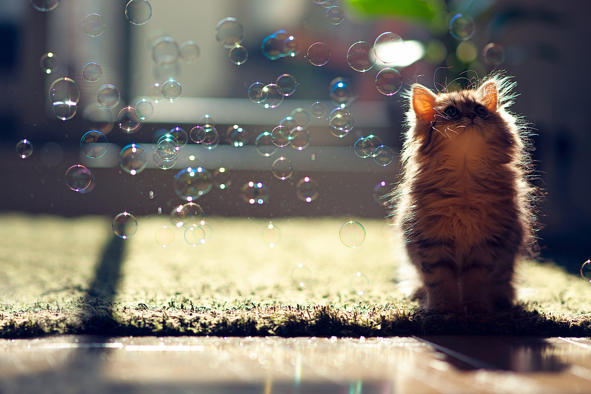 22 Endearing Photos Of Animals Playing With Bubbles