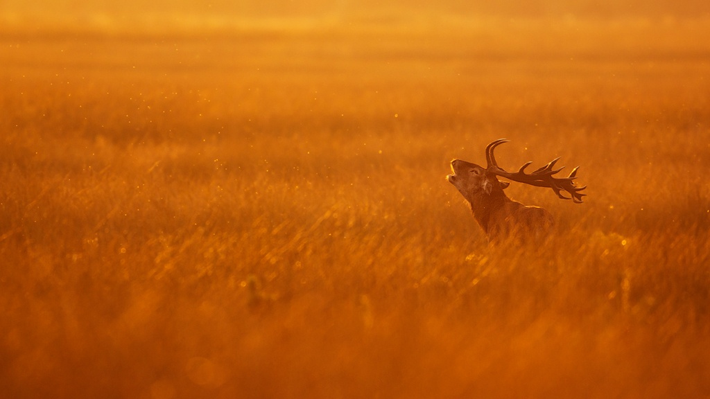 39 Magical Photos Of Animals Captured During Golden Hour