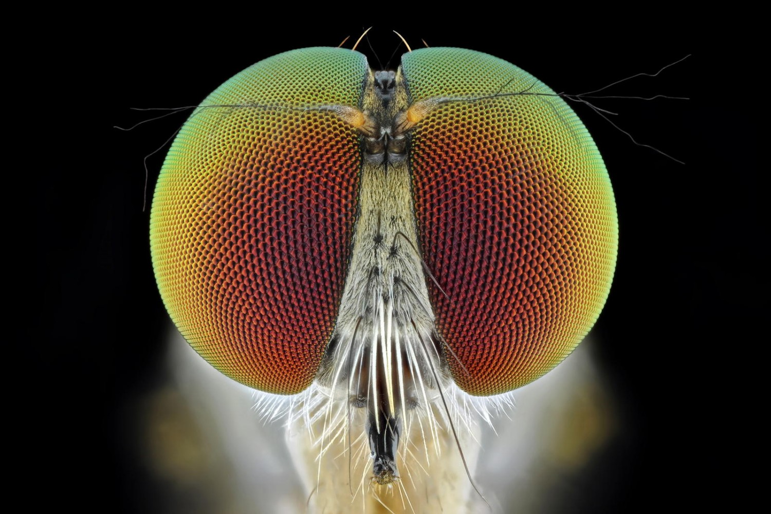 22 Insects Too Crafty To Be Caught By The Naked Eye