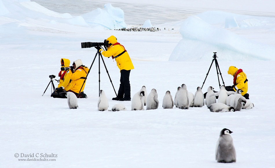 How To Photograph Penguins In Action