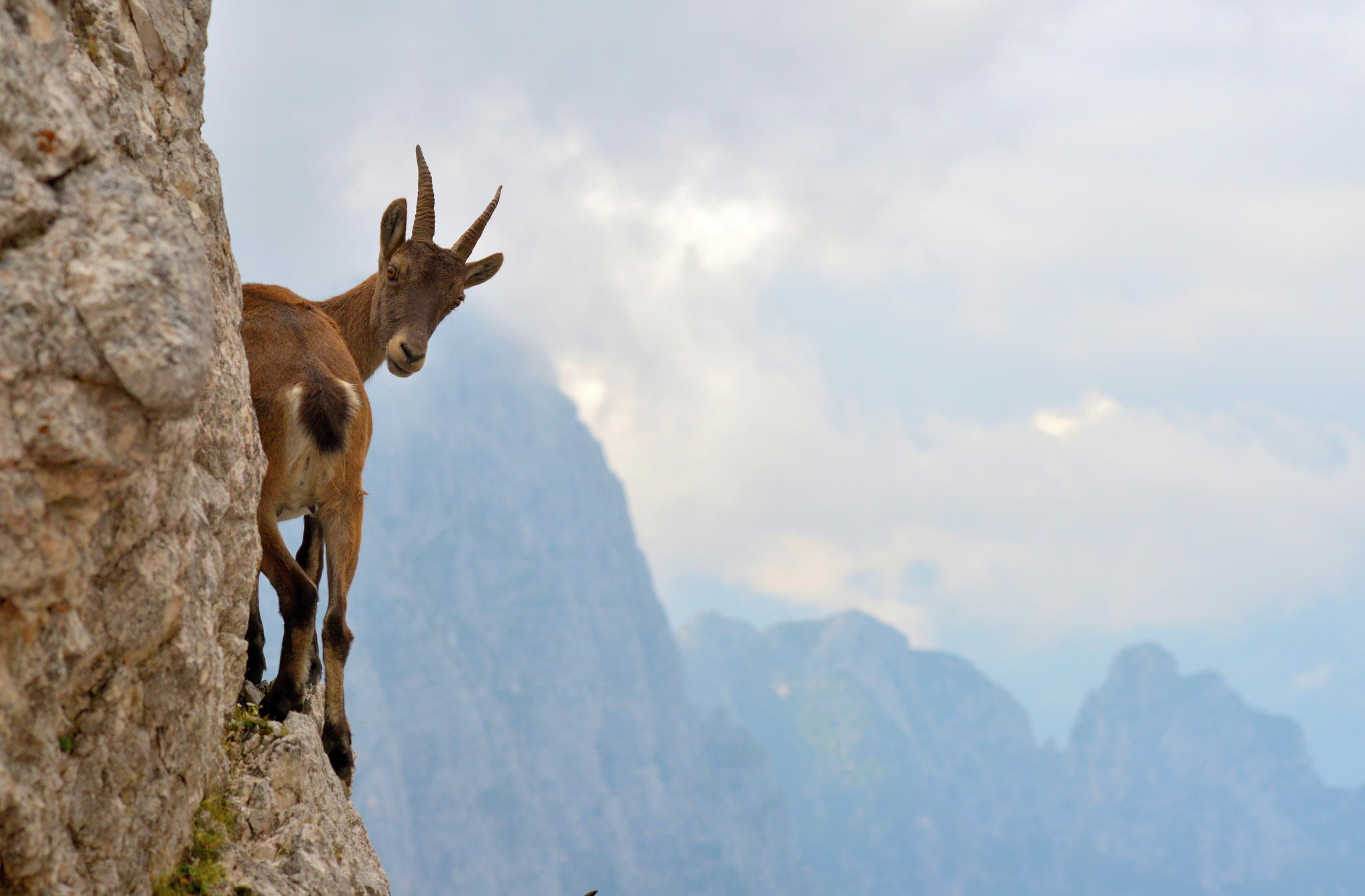 This Heart-Stopping Photo Captures An Ibex On The Edge Of A Mountain