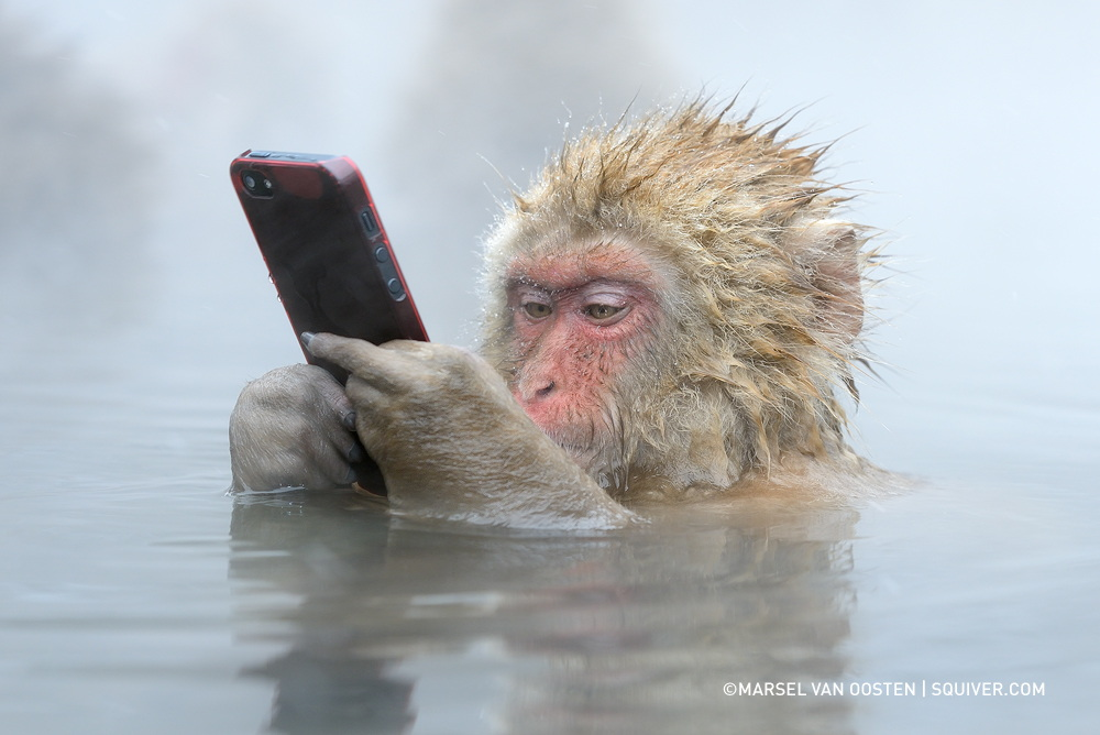 The Story Behind This Incredible Photo Of A Snow Monkey Using An iPhone