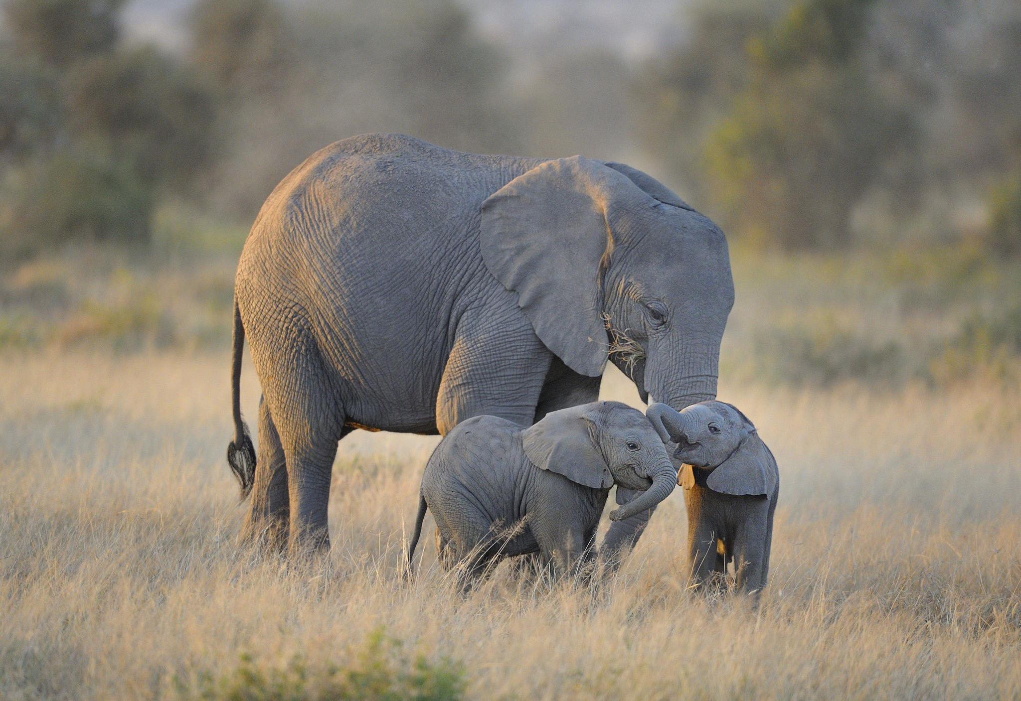 30+ Cute & Funny Baby Elephant Images That Will Brighten Up Your Day