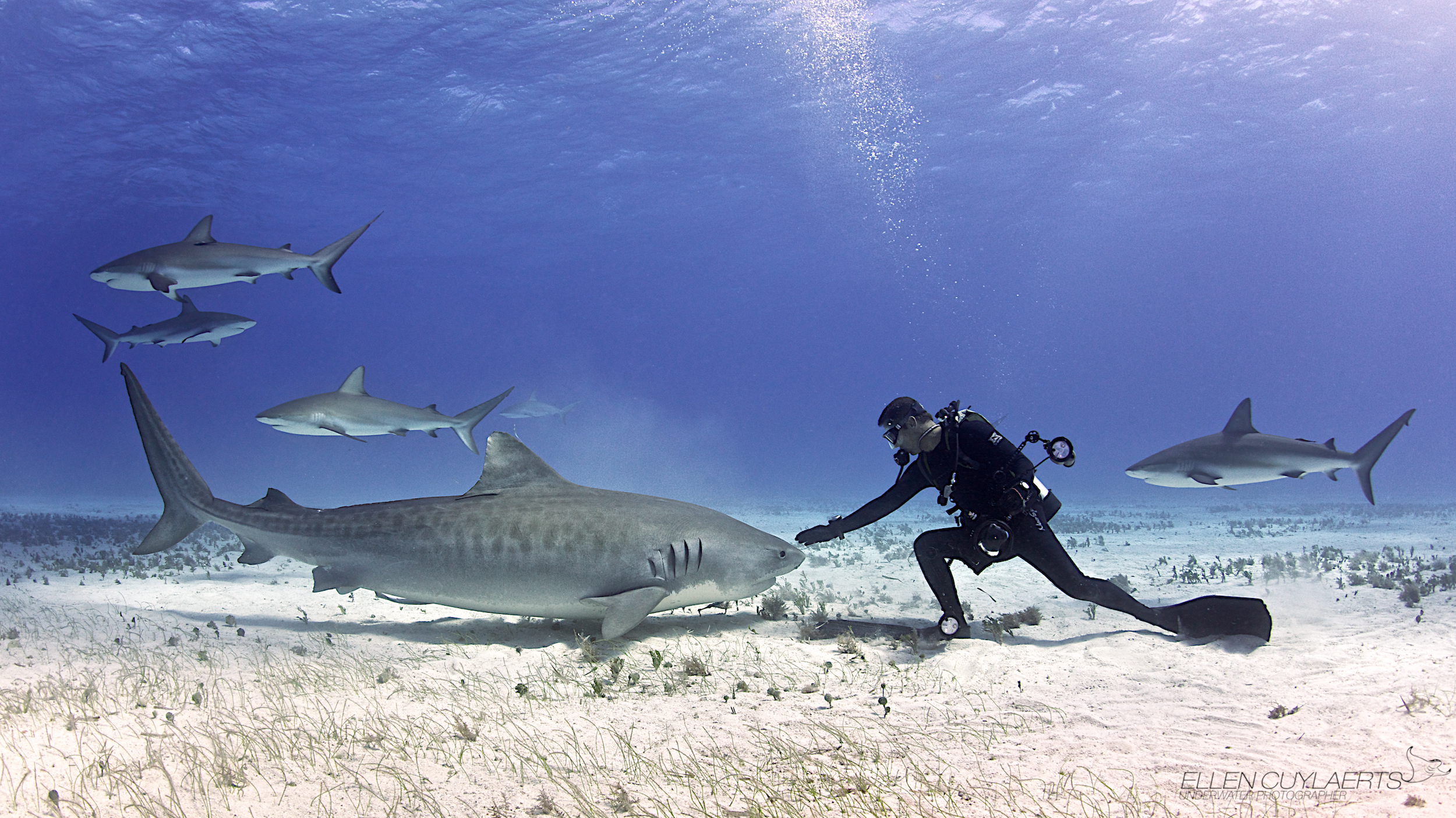 30 Powerful Photos That May Change The Way You See Sharks
