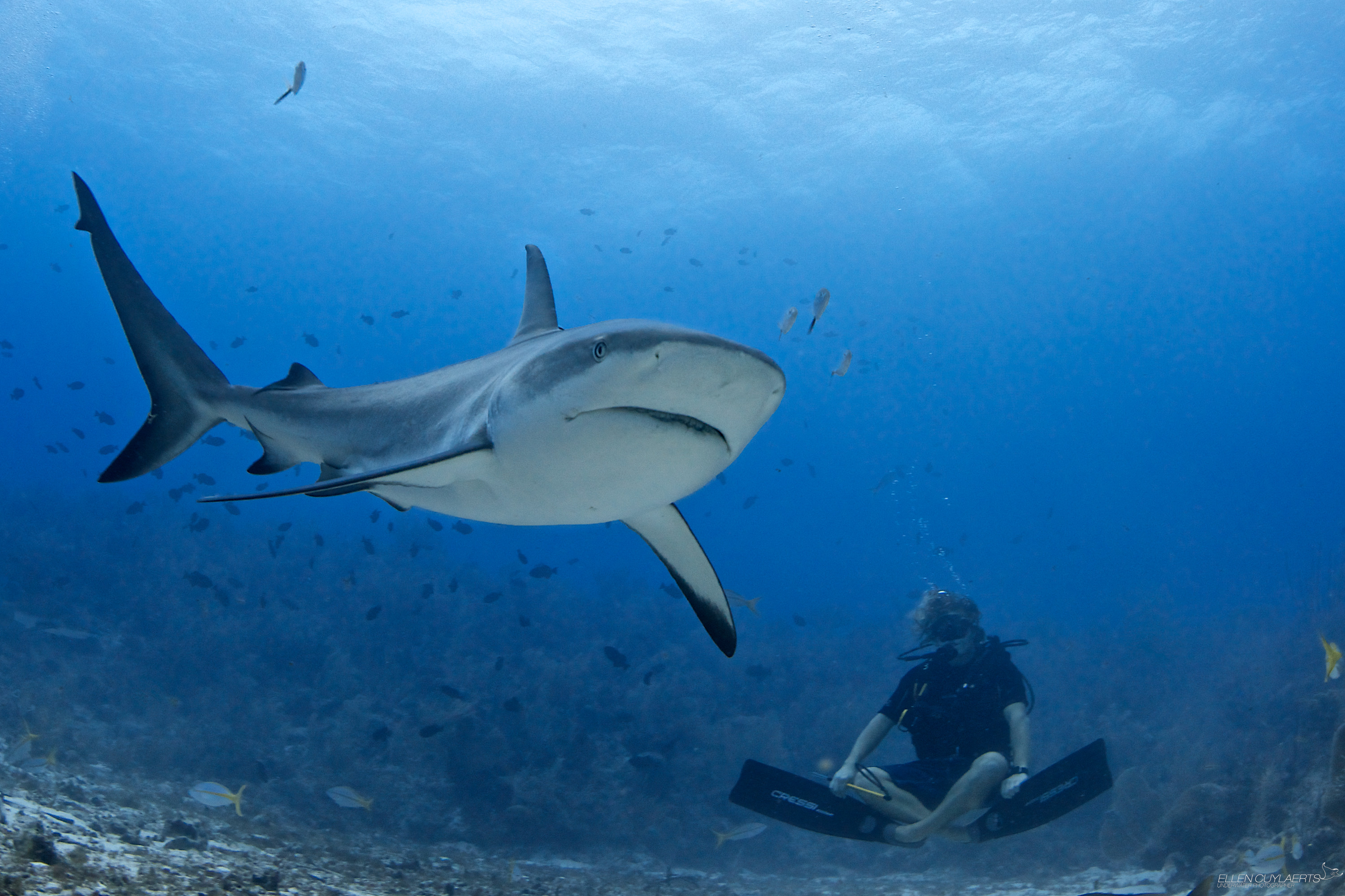 Meet The Fearless Photographer Who Dives With Sharks