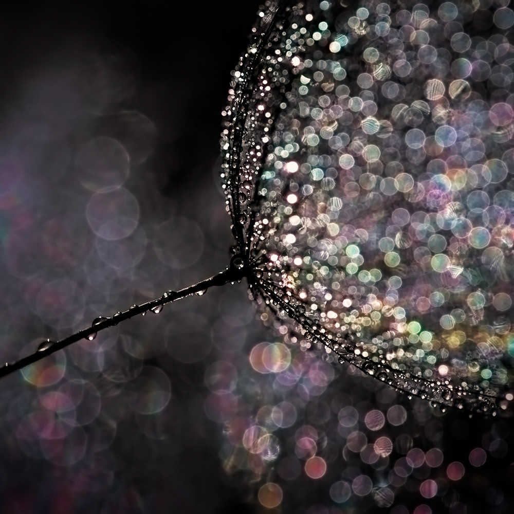 How To Create Beautiful Bokeh Images