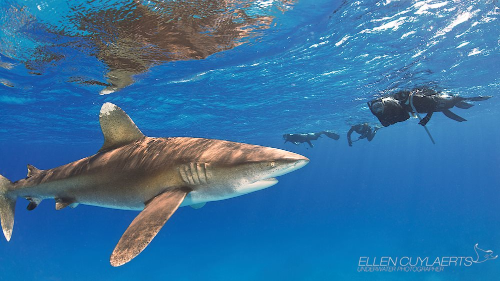Cuylaert kids, 16 and 14 years old, meet a shark in Cat Island