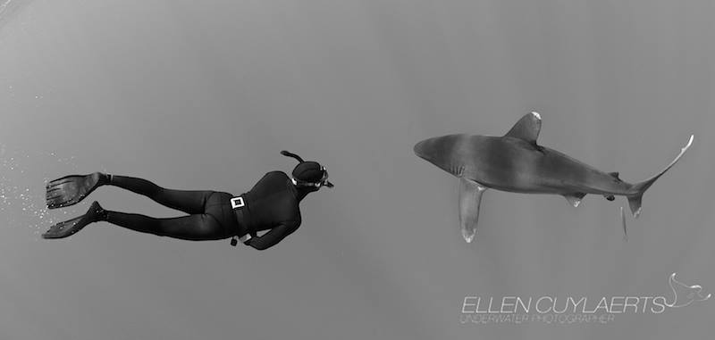 Diving and photographing sharks