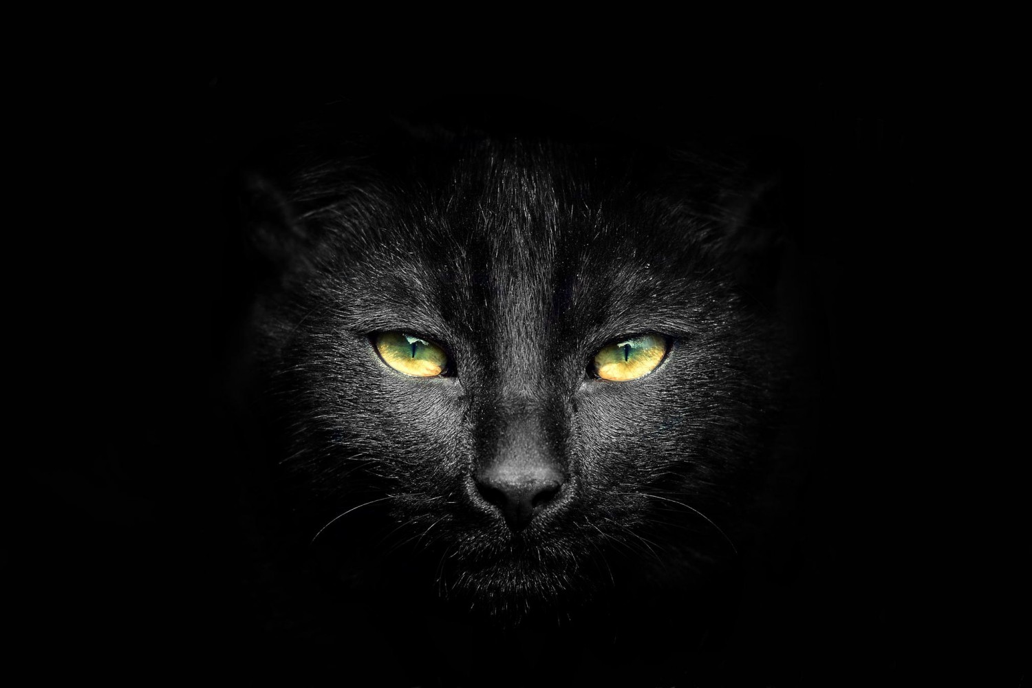 45+ Best Enchanting Black Cat Photos And Images
