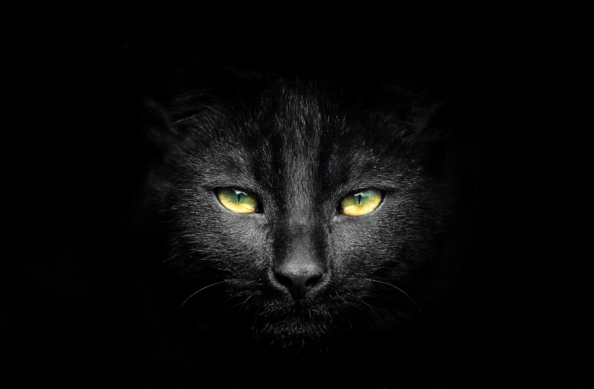 45 enchanting photos of beautiful black cats