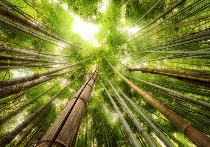 final-bamboo-image