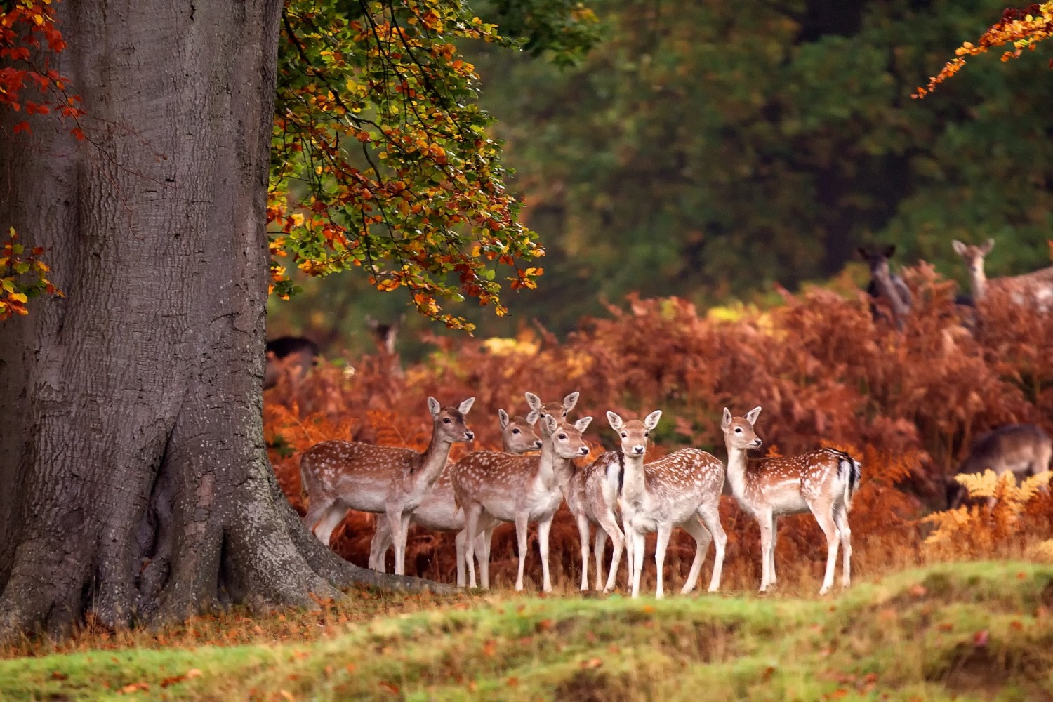 30 Awesome Animals Out And About This Autumn