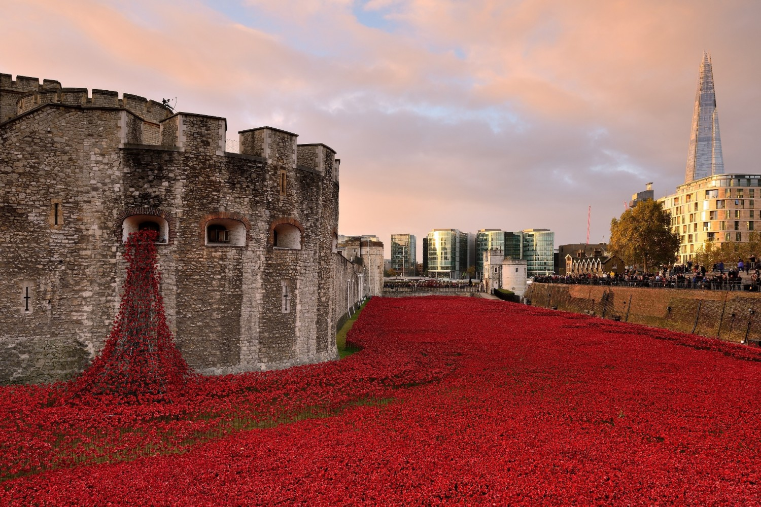 20 Jaw-Dropping Red Poppy Photos In Honor Of Remembrance Day