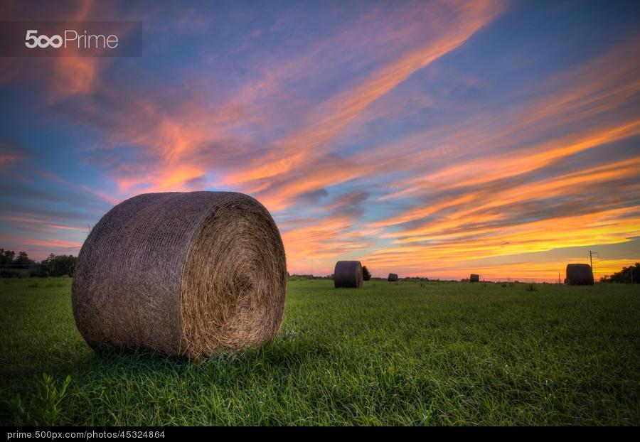 Woodland Bales by Brad Telker