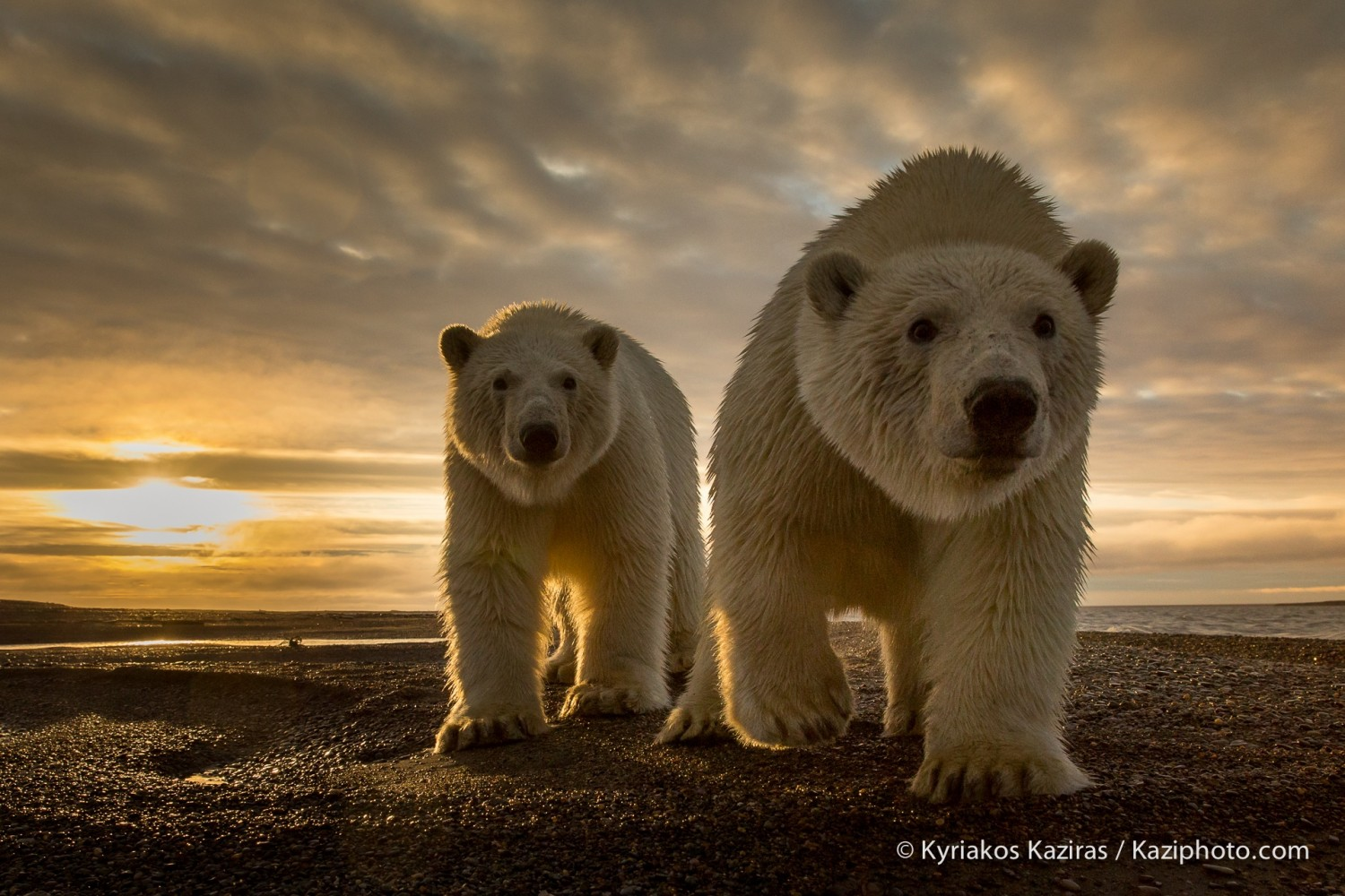 Best of 2014: Top 10 Animal Photos