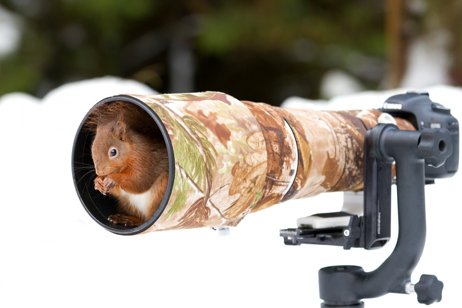 Literal Wildlife Photographers: 19 Photos of Animals Getting Cozy with Camera Gear