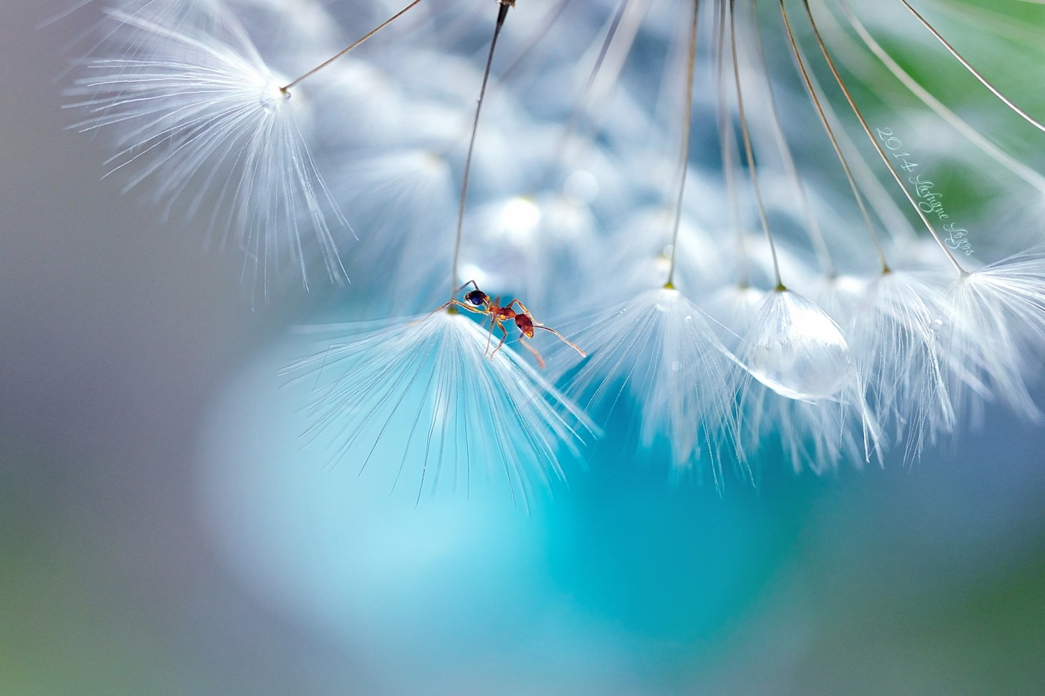 Best of 2014: Top 10 Macro Photos