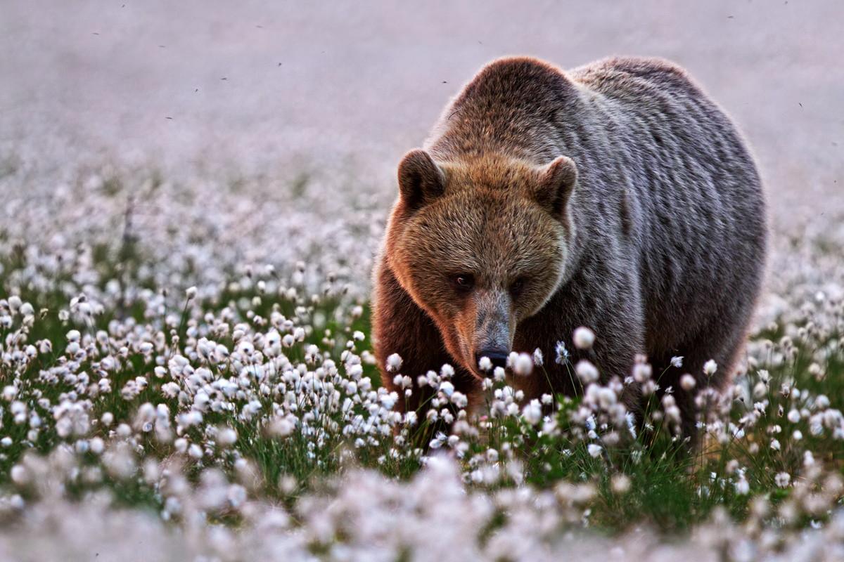 Best of 2014: Top <del>10</del> 11 Nature Photos