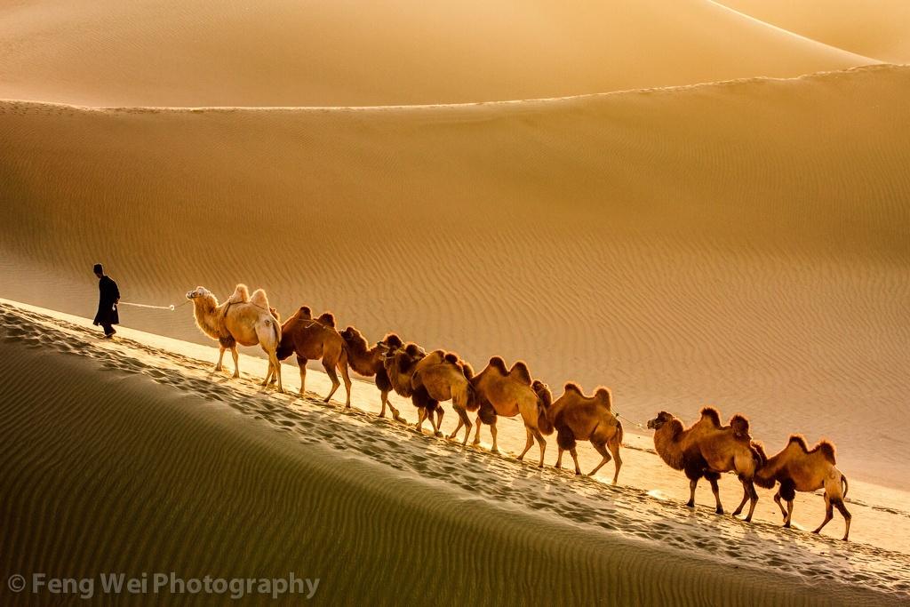 Desert Traveller