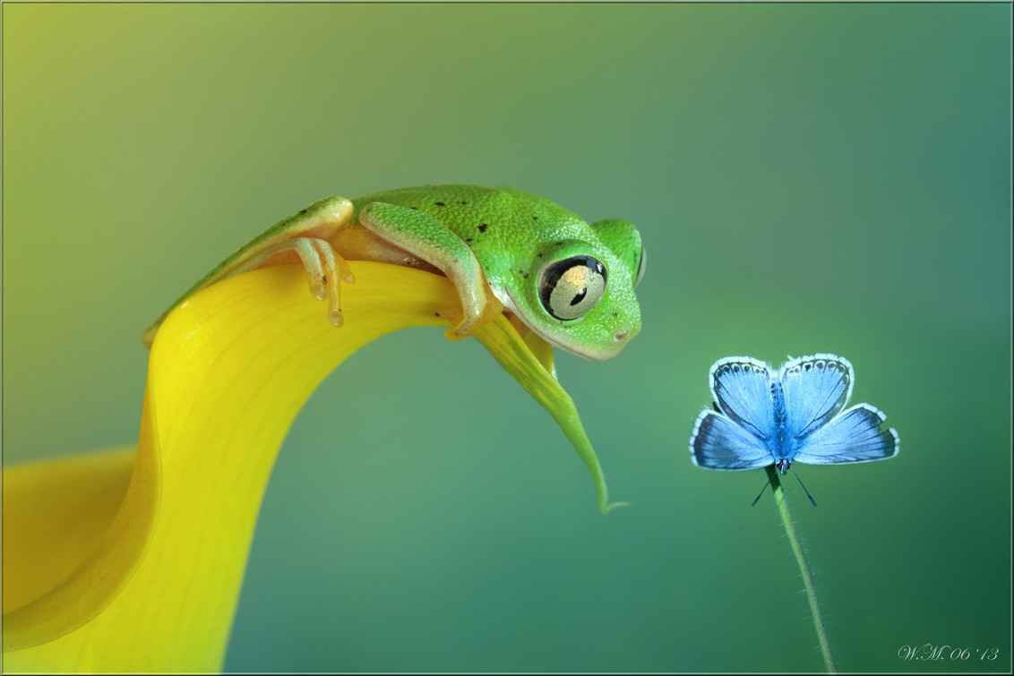 The Magical Macro Worlds of 500px Photographer Wil Mijer