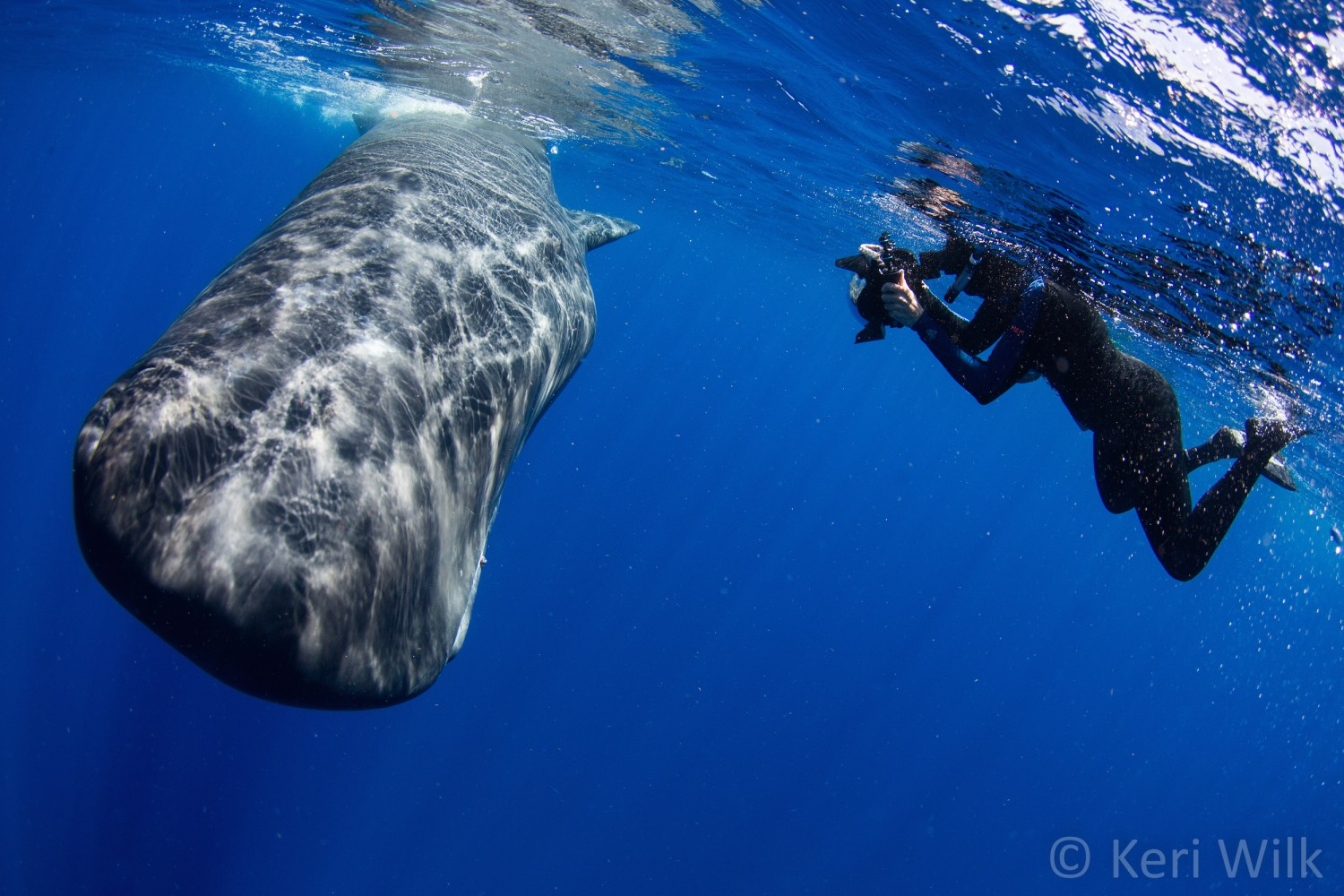 Underwater Photographer Gets Caught in a Sperm Whale 'Poopnado,' Brings Back Photos