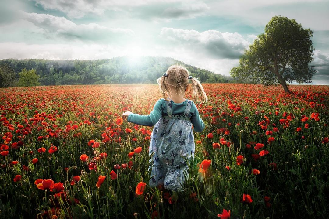 Into the Poppys