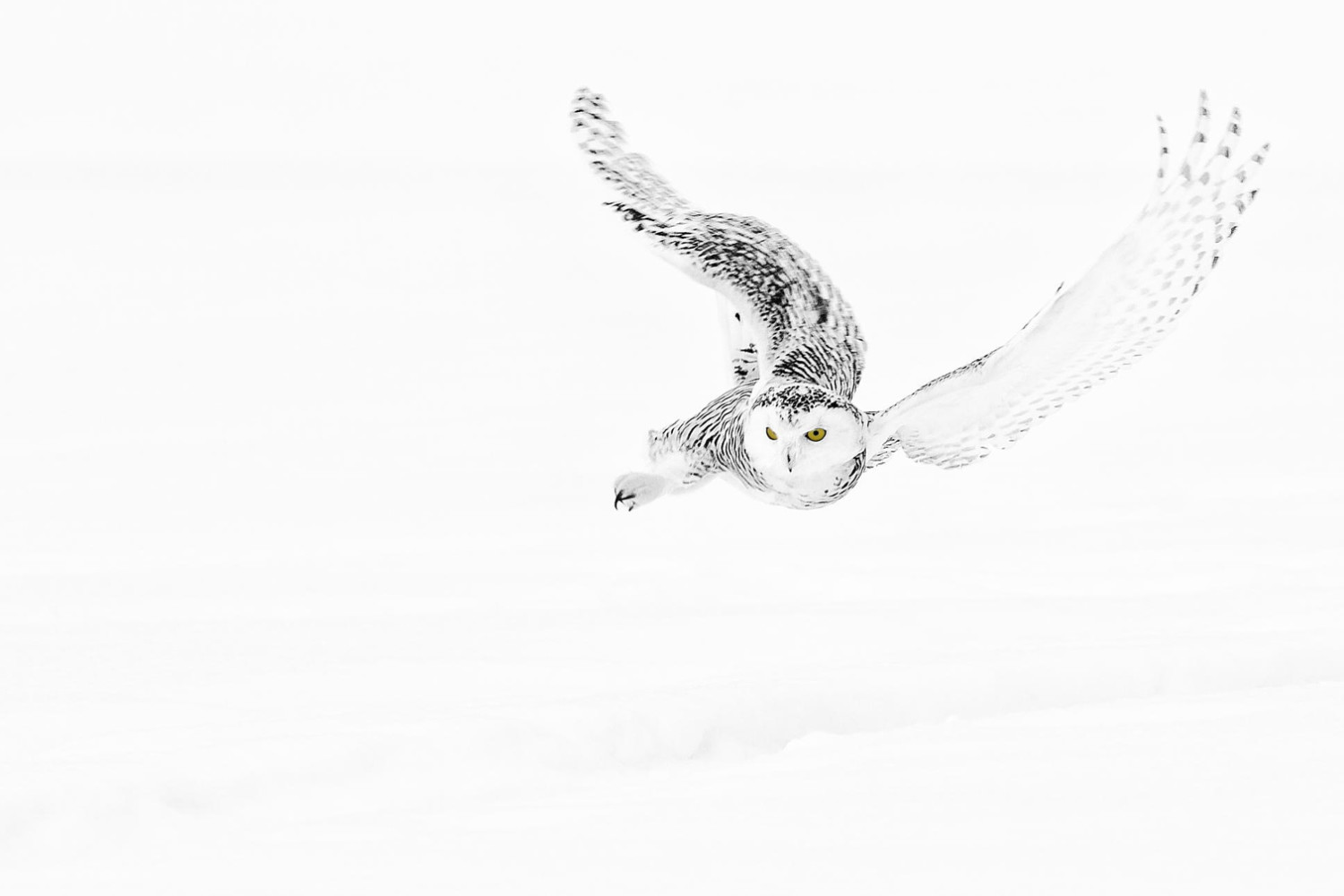 25 Majestic Photographs of Owls in the Snow