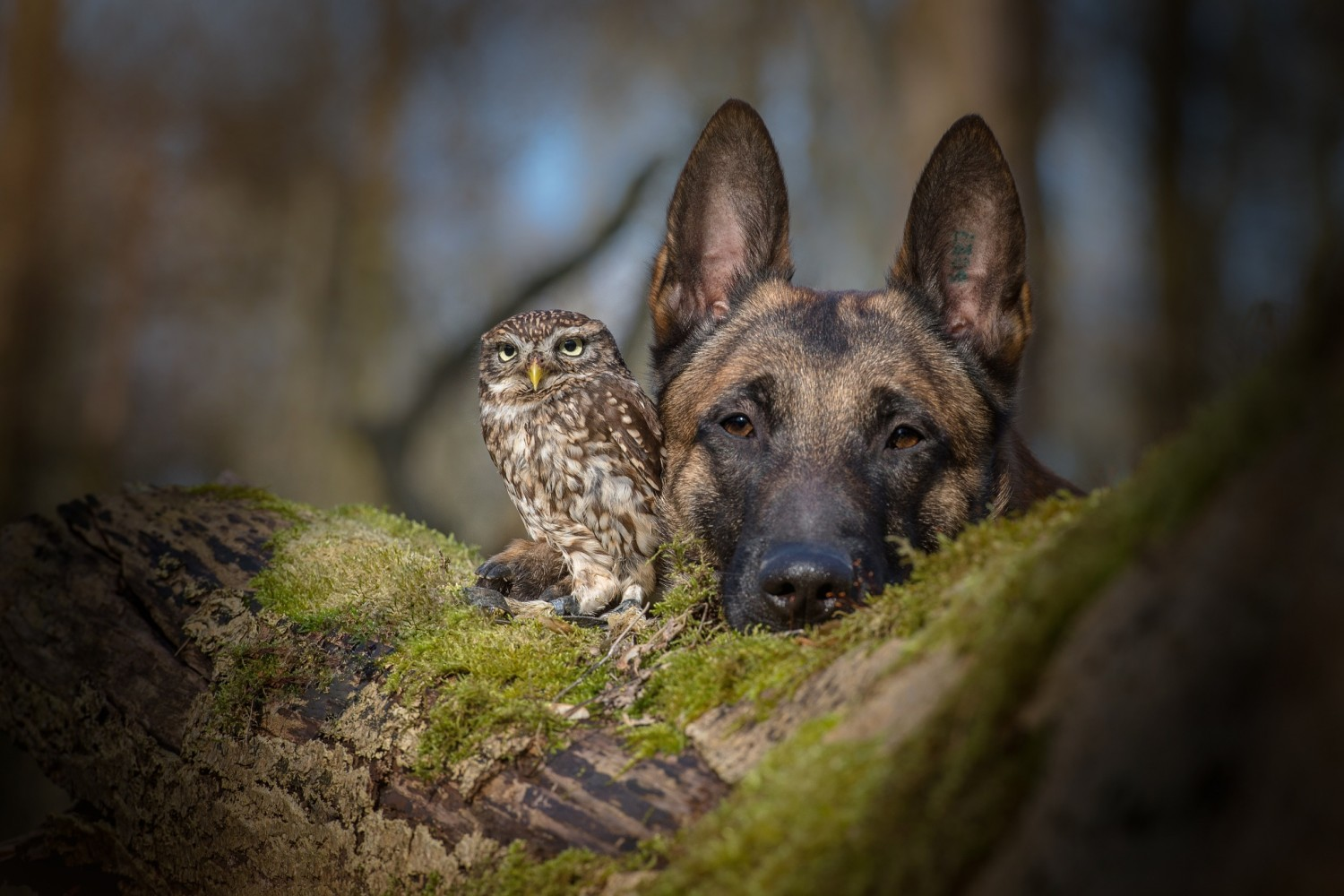 Photographer Captures the Incredible Bond Between a Dog and an Owlet