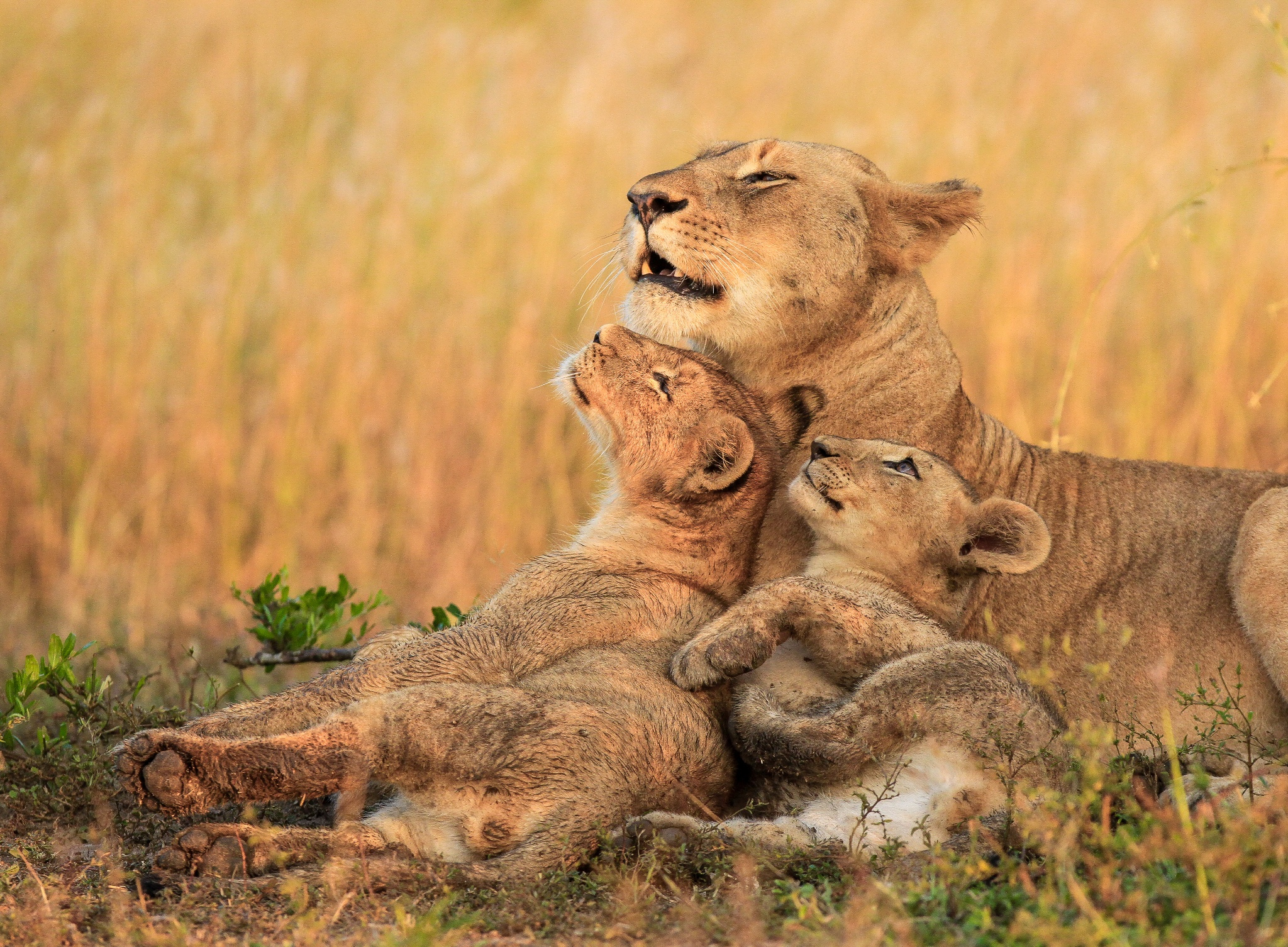 5 Reasons Every Photographer Should Go On An African Safari