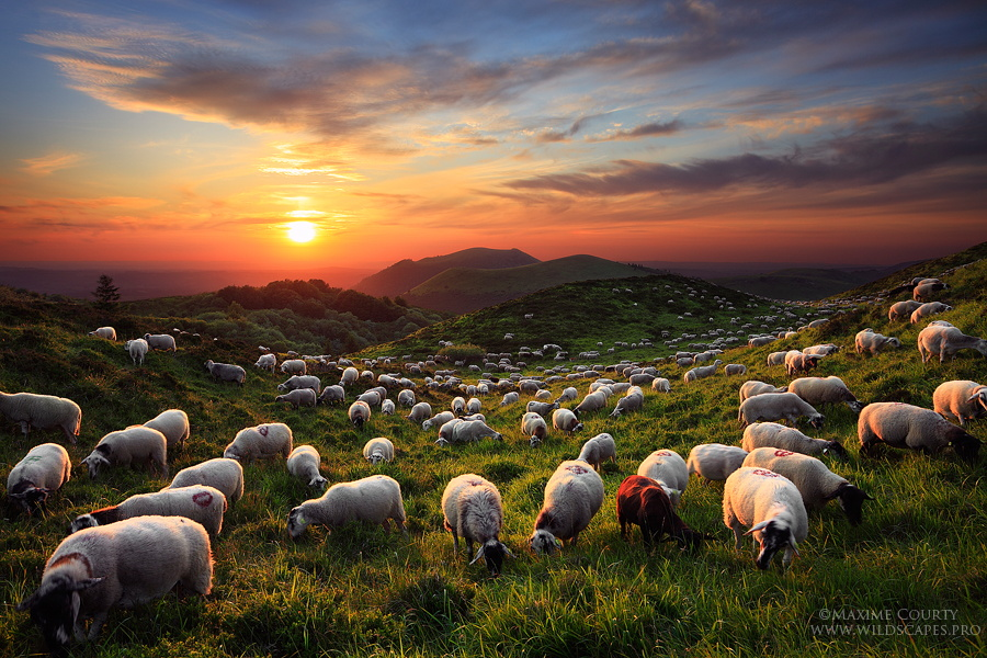 32 Adorable, Awesome, and Epic Photos of Sheep to Count You Into the Chinese New Year