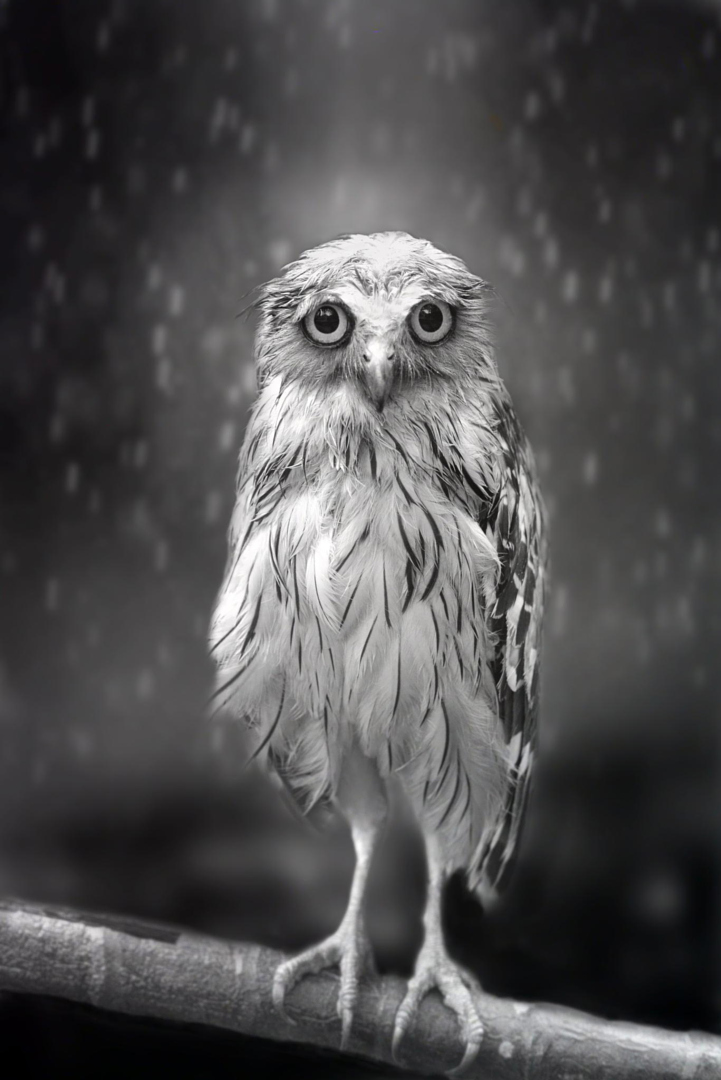Sad A 17 Year Old Pregnant Girl Commits Suicide In River: 500px Blog » » Sham's Story: How A Sad Looking Owl Made