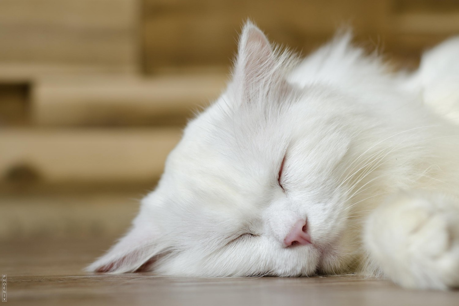 Hoang's Story: A Sleeping Cat Photo Made My Year in 2014