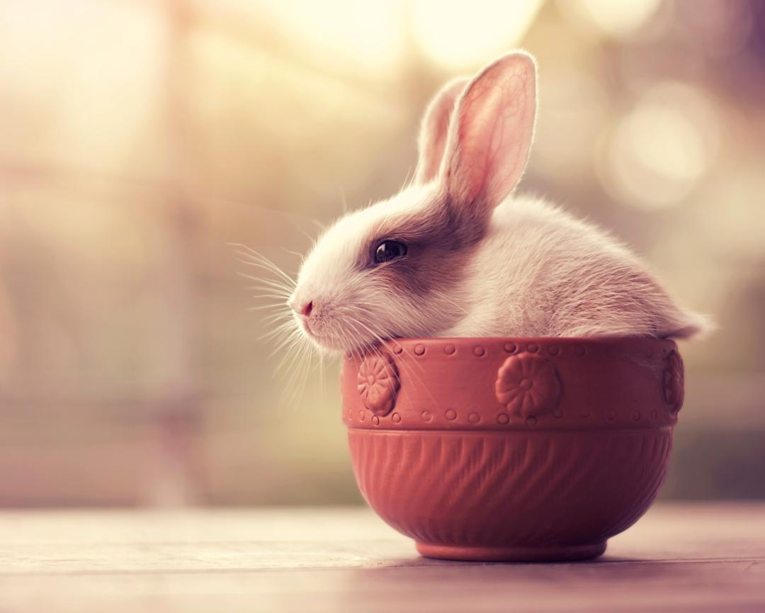 bunny_5