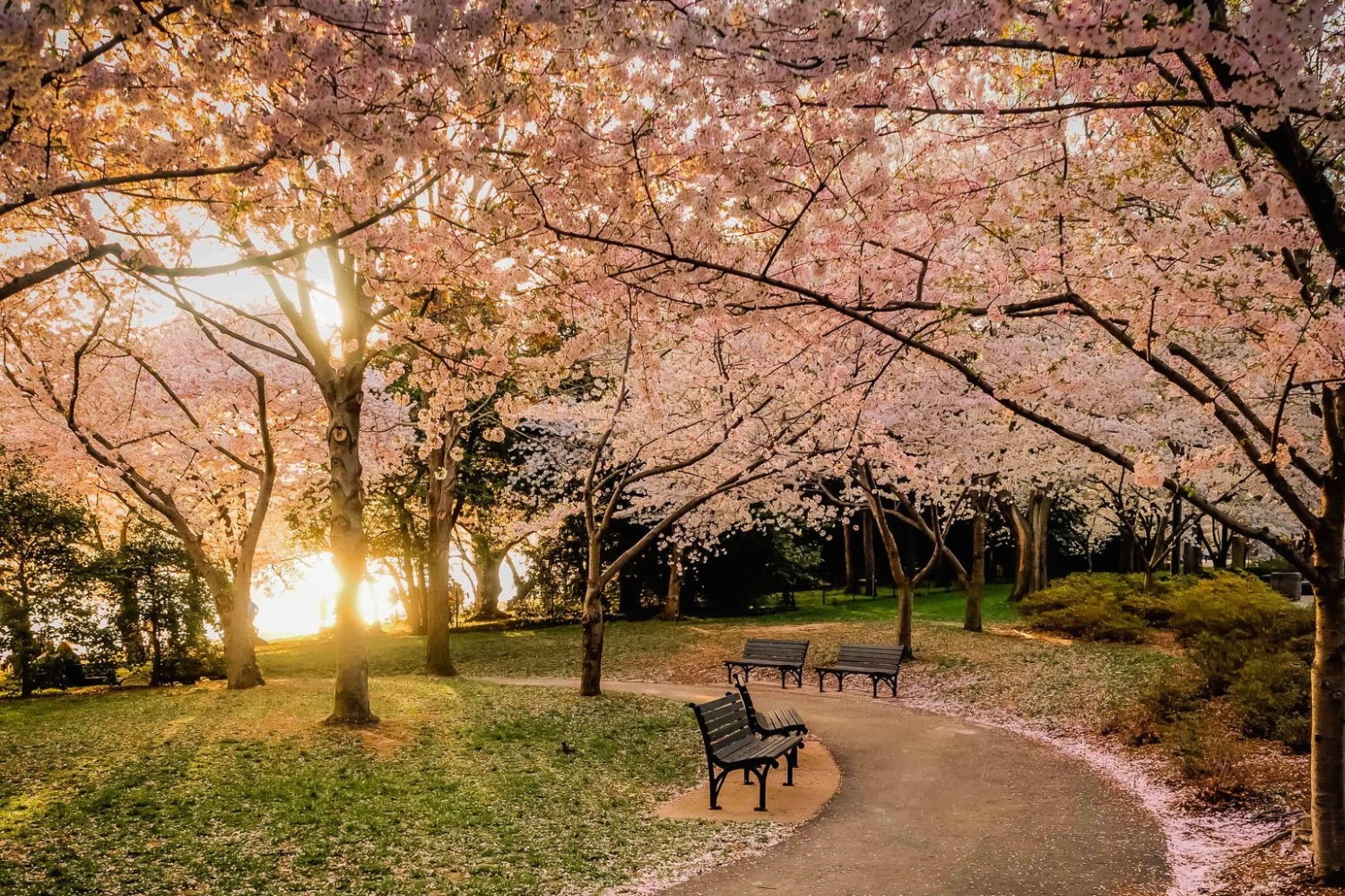 35 Beautiful Photos of Cherry Blossoms Around the World