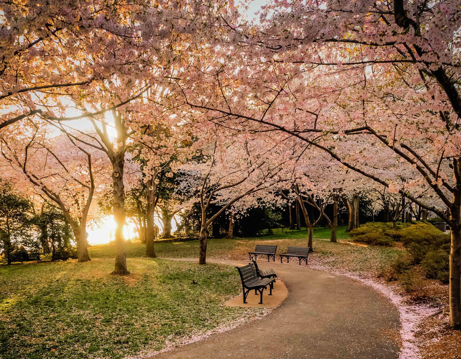 500px Blog 35 Beautiful Photos Of Cherry Blossoms Around The World