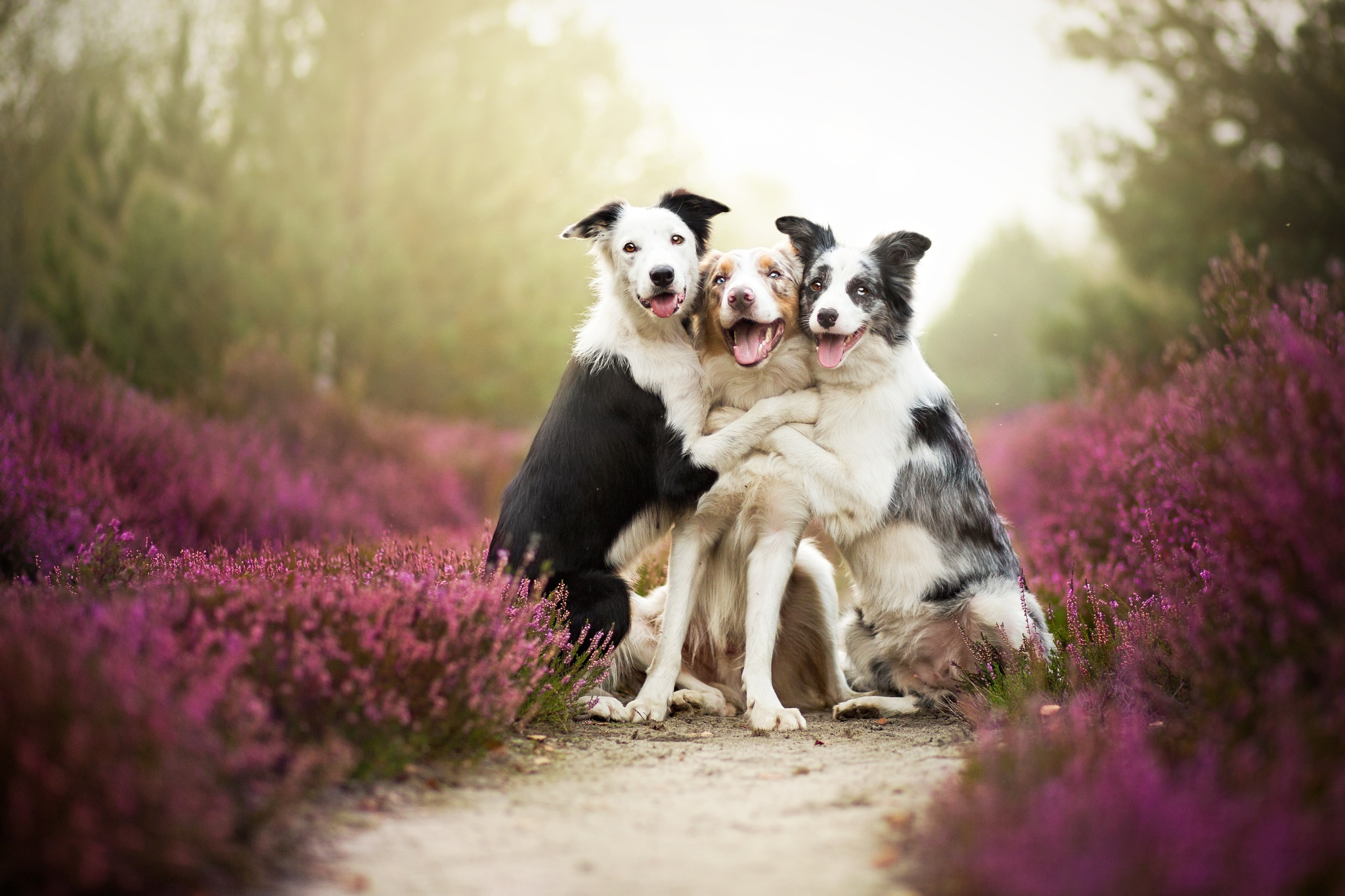 30 Adorable Photos of Animals Cuddling