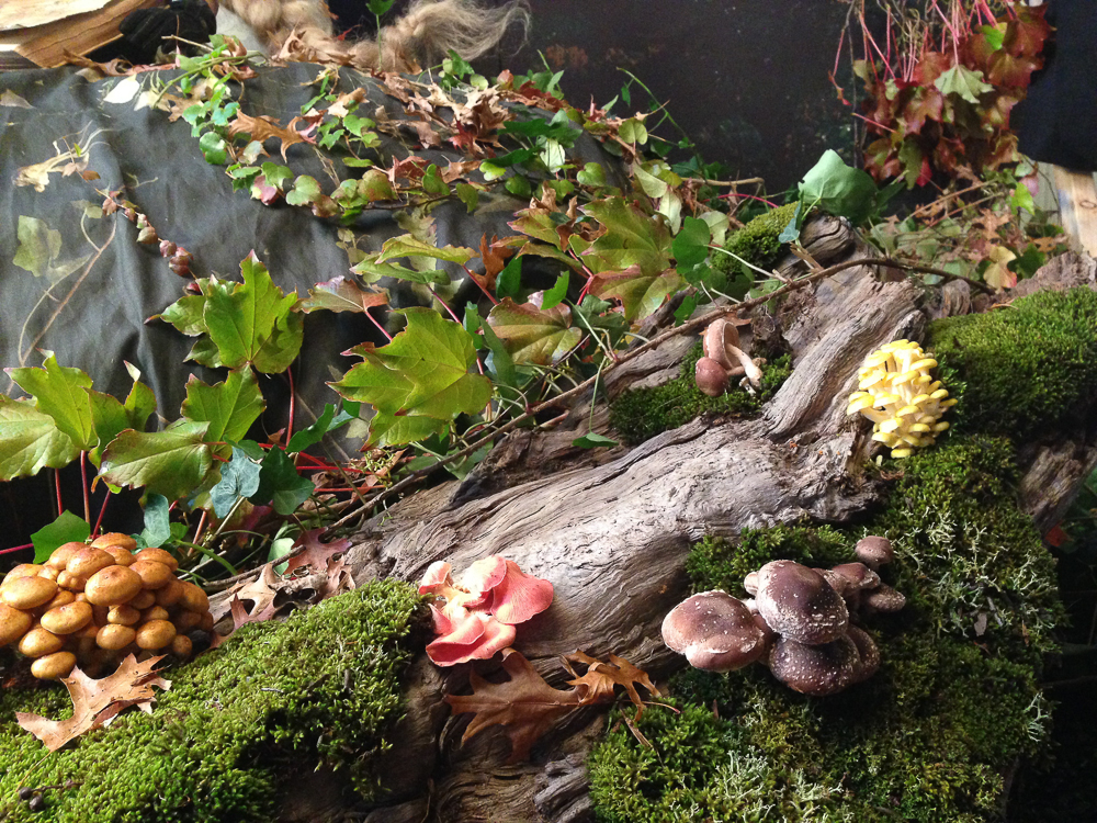 Detail of the gorgeous mushrooms sources for Into the Gloaming.