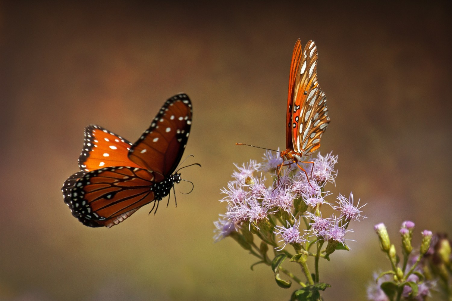 50 Breathtaking Photographs of Butterflies