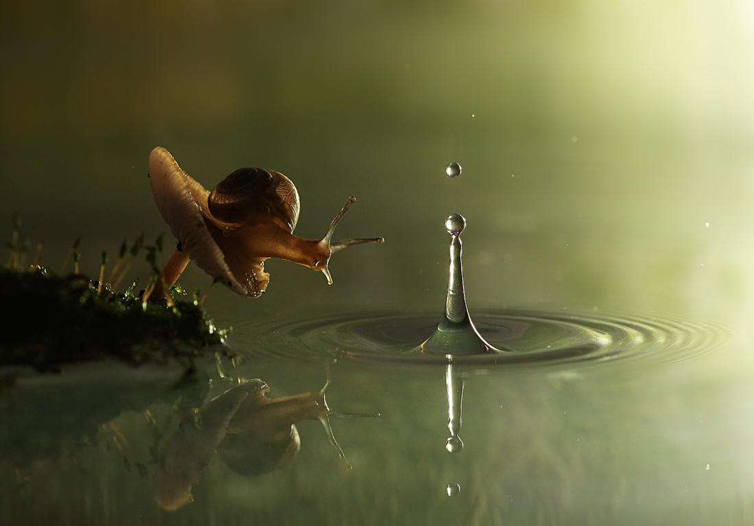 21 Magical Photos of Curious Snails