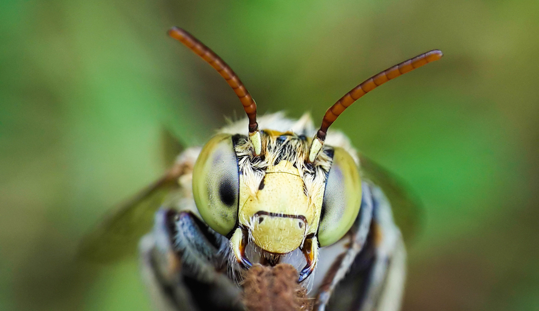 Incredible Macro Photos Taken with a Smartphone & DIY Lens
